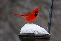 Birds as Birds / Loving birds.