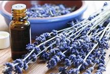 Essential Oils / I use Essential Oils personally and incorporate them into my family's everyday life and household.  Here you will find links to favorite oils and articles addressing specific issues you might be facing yourself.  Contact me directly to find out what is my oil brand of choice and to learn more about getting yours.