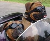 Ruff Ride / They are fast and furry. They are adventurous and lovable biker dogs who have figured out that life is better on two wheels.