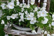 ❋ White Garden ❋ / by Marion Brocant'elle