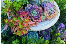 Creative- Planting / by Michelle Yeary Crawford