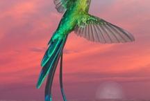 Birds / by Elaine Jones