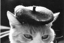 Nouveau Cat Lady / Cat art.
