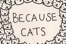 Because Cats / by Kat