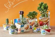 Cinco de Mayo With Silk! / What's better than a fiesta? Cerebrate Cinco de Mayo with some of our favorite treats! / by Silk