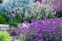 Outdoors / Inspiring gardens, projects, and outdoor spaces. / by Shelley Cornia