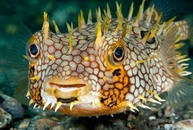 The Briny Deep / The beauty of the tropical fish,and other sea creatures is so awesome.God put his beauty under the sea for us to enjoy too. / by Sylvia Moore