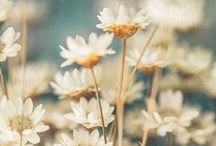 Precious Petals / ... and lovely leaves ♥ / by Kate Ingarfield