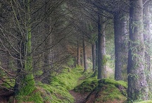 Incredible Places / by Kate Ingarfield
