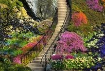 Garden Ideas  / by Gail Fattori