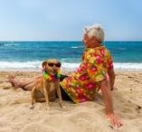 Pet Health Insurance News and events / We don't only sell pet insurance: Petsecure is involved with great animal organizations across Canada and takes part in lots of pet-related activities and events!
