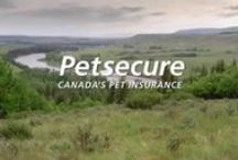 Pet health videos / We love to see healthy, happy pets! Here's a collection of informative videos featuring our veterinarian, Dr. Colleen, that can help you keep your dogs and cats in good health.