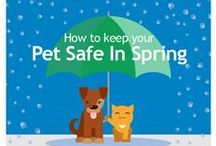 Pet insurance / Ever wondered how pet insurance can help you and your furry friend?