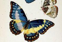 Flora & Fauna Illustration