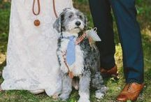 """Pets + Saying """"I do!"""" / Inspiration on how to have your pets be part of your wedding day."""