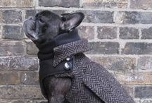 Pet Style / Pet fashion and accessories for your stylish pup or kitty, and some for you!