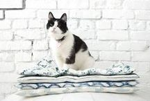 Pet Crafts / Fun craft ideas to make for your furry friend!