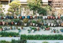 .the_garden / by victoria lópez