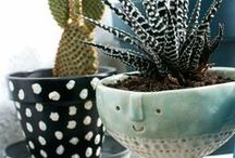 Indoor & Outdoor Garden / A board about plants, both indoor and outdoor. Care tips for people with a light green thumb