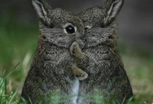 Cute Animals / by Brittany Abbott