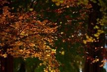 Fall / by Brittany Abbott
