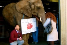 Elephante!!!! / by Selena Signoretti