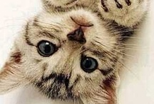 Cute Animals / cuteness in a picture / by Pinteresting Fool