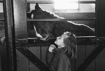 ✭klementine✭ / My daughter, klementine's, passion in life ~ Horses / by Magda✭Lena