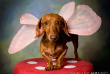 Dachshunds-Dress Up