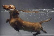 I love Dachshunds / by Penny Harvey