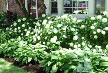Landscapes and Gardens / Curb appeal is so important. Great tips to beautify your landscape
