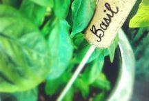 Green Thumb / by Anastasia Lapointe
