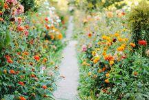 Future garden / Ideas for a future garden.