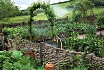 Veggie garden / Vegetable garden ideas - veggies, beds, design etc