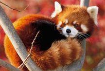 Cute/Funny/Beautiful Animals