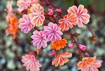 """Garden / """"To plant a garden is to believe in tomorrow.""""   ― Audrey Hepburn"""