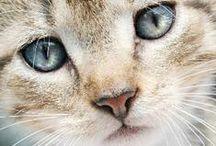 Kitties! / Funny and Beautiful