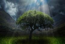 I love Trees / by Kandi apple art gallery