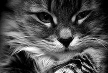 cats (I think I might want one) love / by Erika *e* Willard