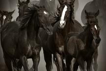 equus / by Rachel Soller McClure