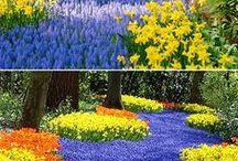 Pretty Things!!! / Life is beautiful!!! / by Jennifer Samala