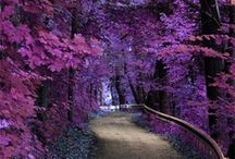 Purple Nature / by The Purple Store