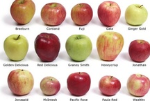 Apples, Apples / by William Hatley
