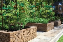 Raised Bed Gardens / by Gidget Doughty