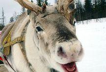 Christmas Sleigh Rides / by Suzie Suchman