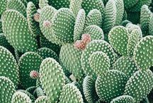 Green Greeneries / #succulents #cactus #plants #plantes #greens #homedecor #palms #verdure #leaf #leaves #palmier #cacti #green #nature #plantes #verdure #homedecor #interiorinspo #minimalist #minimalism #minimalshots #minimalphoto