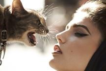 """Adoro I Gatti / """"even the smallest feline is a masterpiece"""" - Leonardo da Vinci / by Lisa Tudor"""