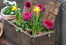 Garden/Outdoor Ideas.... / by Privy Skin Care
