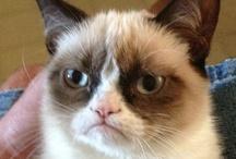 Grumpy Cat / No! / by Lisa Tudor