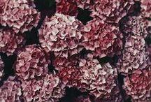 ✪ oh  flora ✪